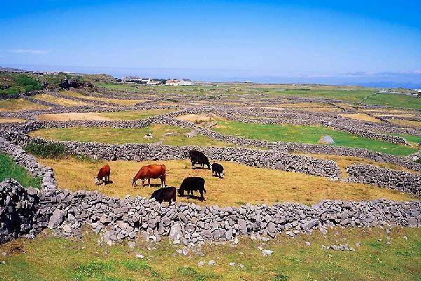 The archipelagos of the Atlantic coast. , The archipelagos of the Atlantic coast , Ireland