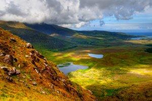 La flora , La flora dell'Irlanda , Irlanda