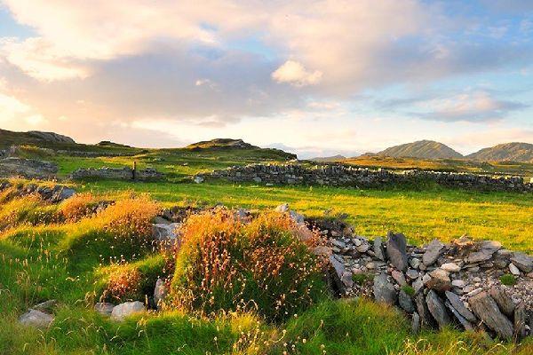 Die Flora , Wiesen und Heide, Irland , Irland