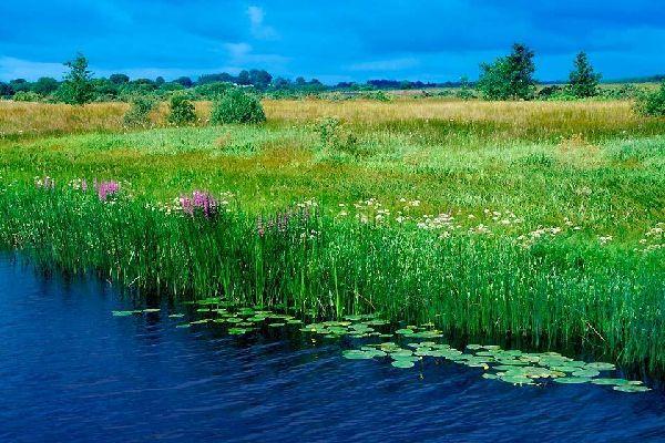 Die Flora , Die Wasserflora, Irland , Irland
