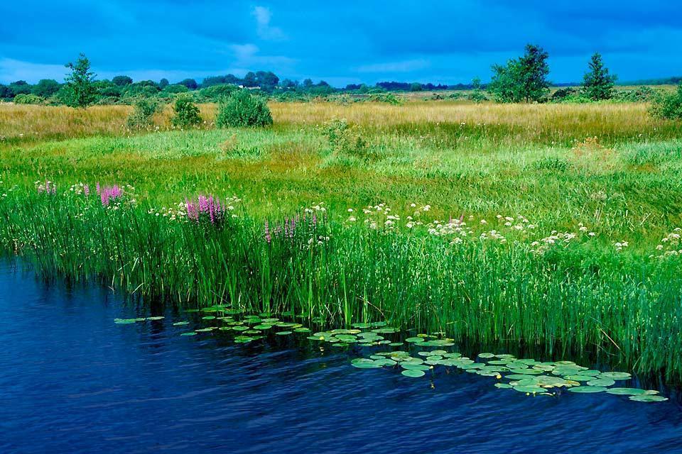 Plant wildlife , Marine plant life, Ireland , Ireland