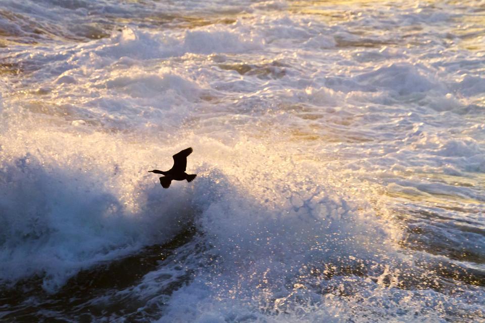 Los pájaros , La fauna avícola, Irlanda , Irlanda