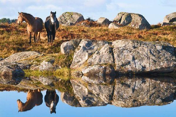 Die Ponys , Die irischen Ponys , Irland