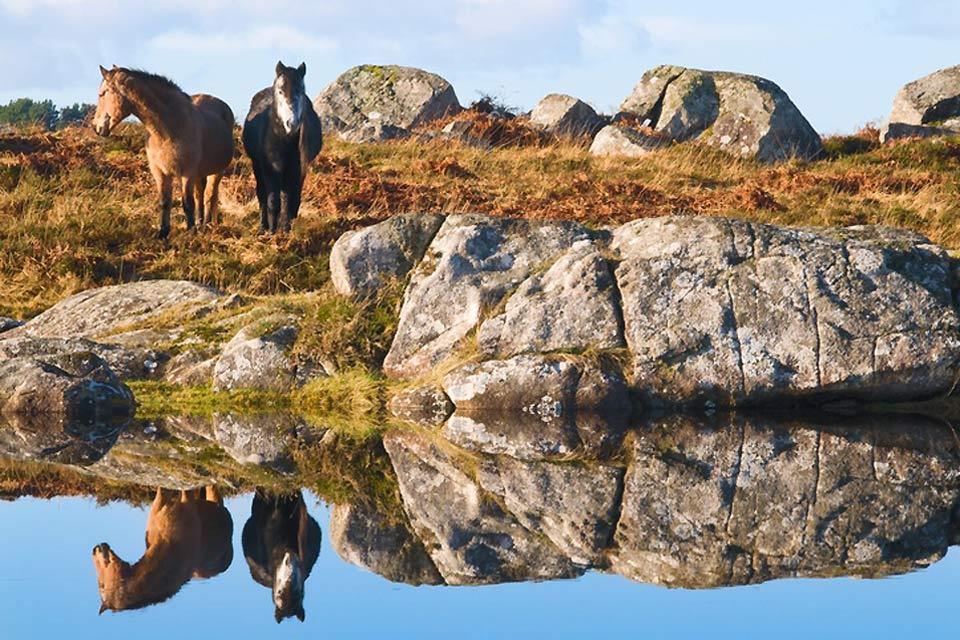I pony , I cavalli irlandesi , Irlanda