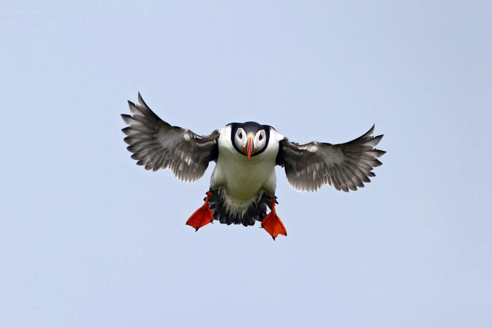 Las aves marinas, las focas , La fauna irlandesa , Reino Unido