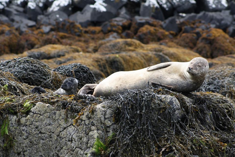 Las aves marinas, las focas , Reino Unido