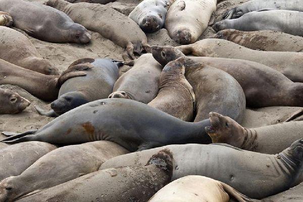 Marine wildlife , Icelandic seals , Iceland