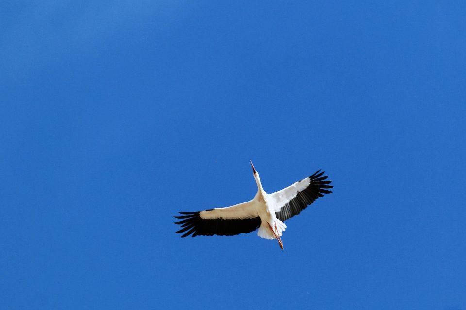 L'ornithologie , Israël