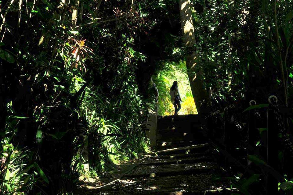 Le pic des Blue Mountains , Jamaïque