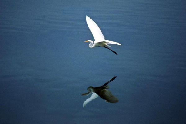 Gli uccelli , Giamaica