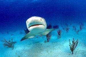 La fauna acuática , La fauna acuática, Jamaica , Jamaica