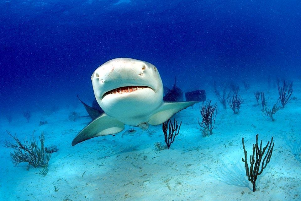 La fauna acquatica , La fauna acquatica, Giamaica , Giamaica