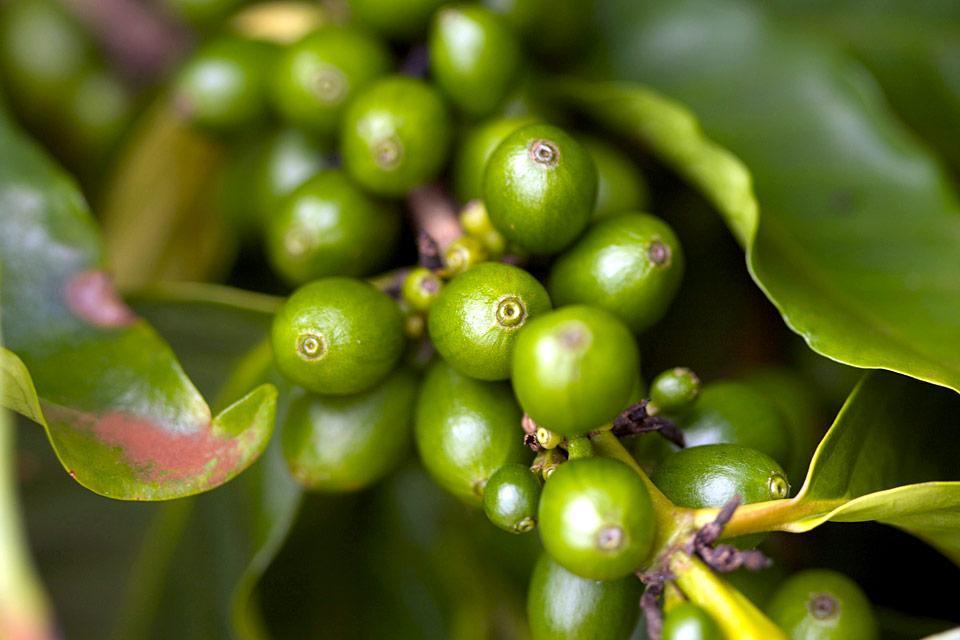 La vegetazione lussureggiante , Giamaica
