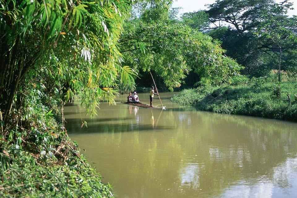 La vegetazione lussureggiante , La vegetazione lussureggiante della Giamaica , Giamaica