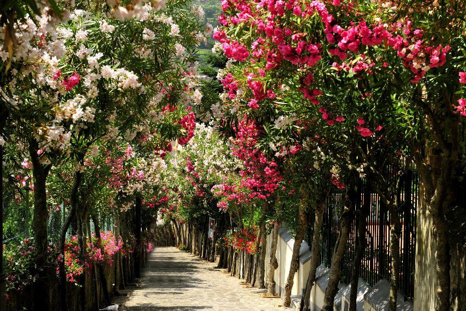 La côte amalfitaine , Jardin amalfitain , Italie