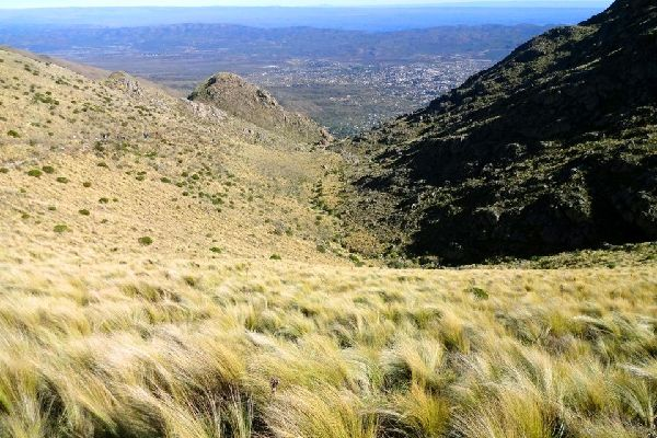 The Sierra de Córdoba , Plant life in the Sierras , Argentina