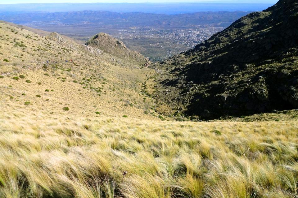 La Sierra de Cordoba , La végétation de la Sierra , Argentine