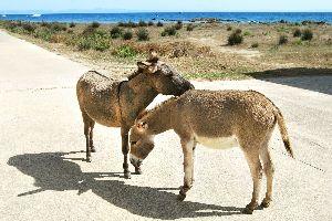 La faune de Sardaigne , Faune de Sardaigne , Italie