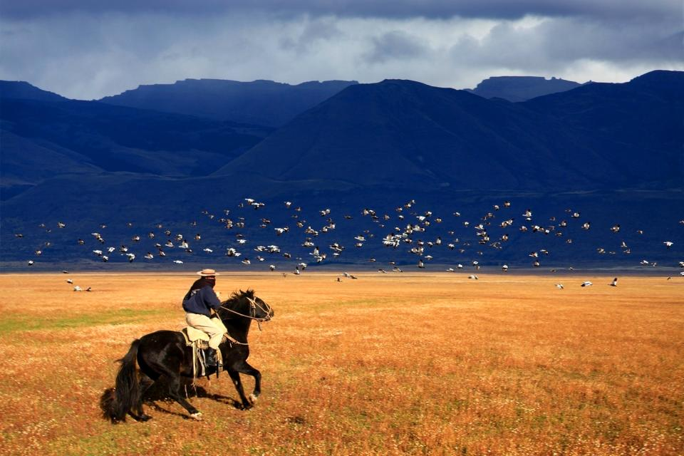 The Pampas , A Gaucho , Argentina