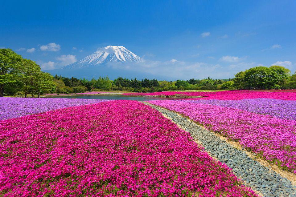 El monte Fuji , Un cono perfecto , Japón