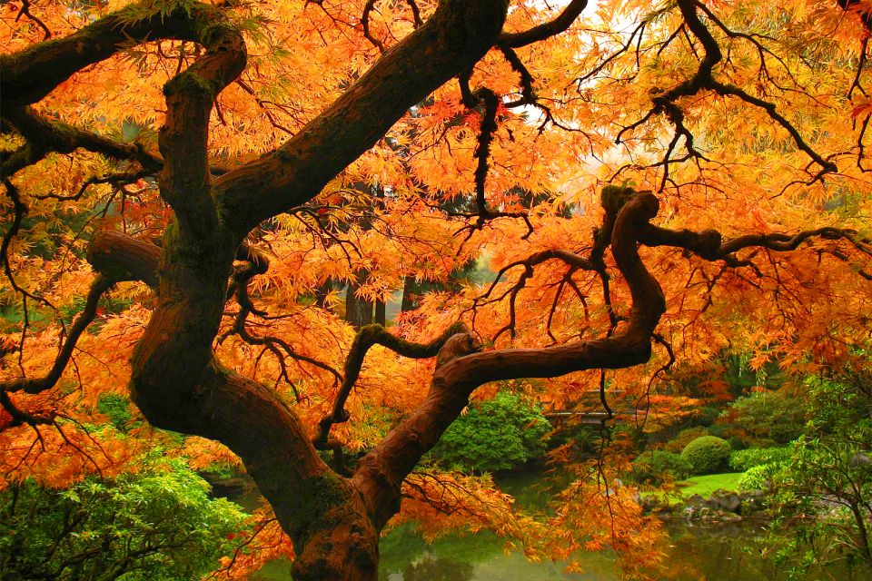 Forests , A Japanese maple , Japan