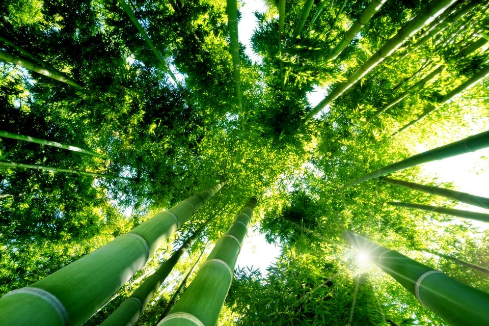 Forests , A bamboo forest , Japan