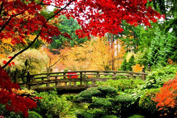 Las geishas , Una antigua tradición japonesa , Japón