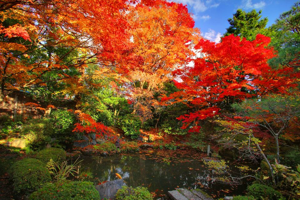 Geishas , The Japanese maple , Japan
