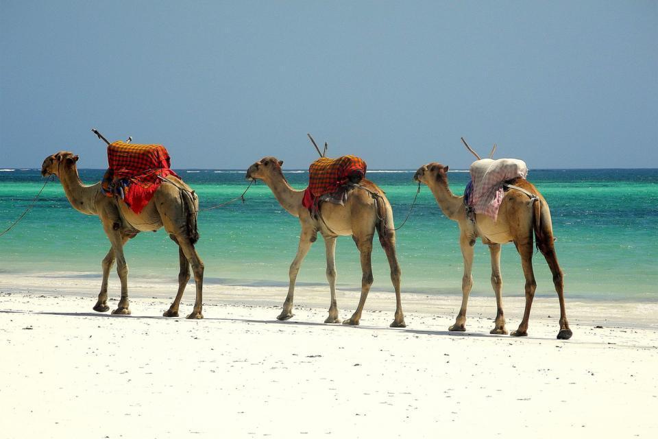 Les plages de Mombasa , La côte sud de Mombasa , Kenya