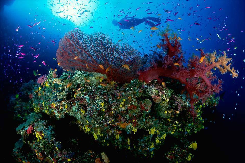 Marine National Parks , Mombasa Marine Park , Kenia