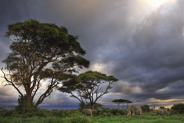 Amboseli National Park , The landscapes of Amboseli National Park , Kenya