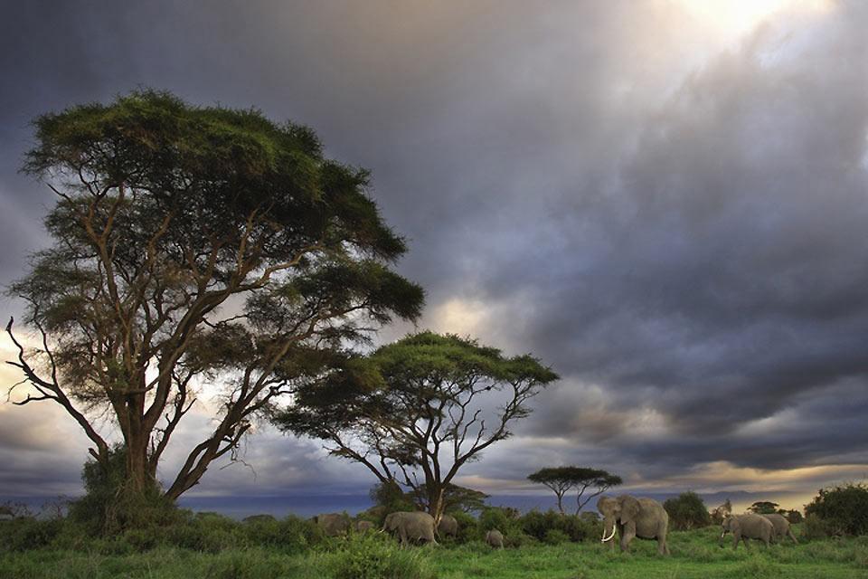 La reserva de Amboseli , Kenia