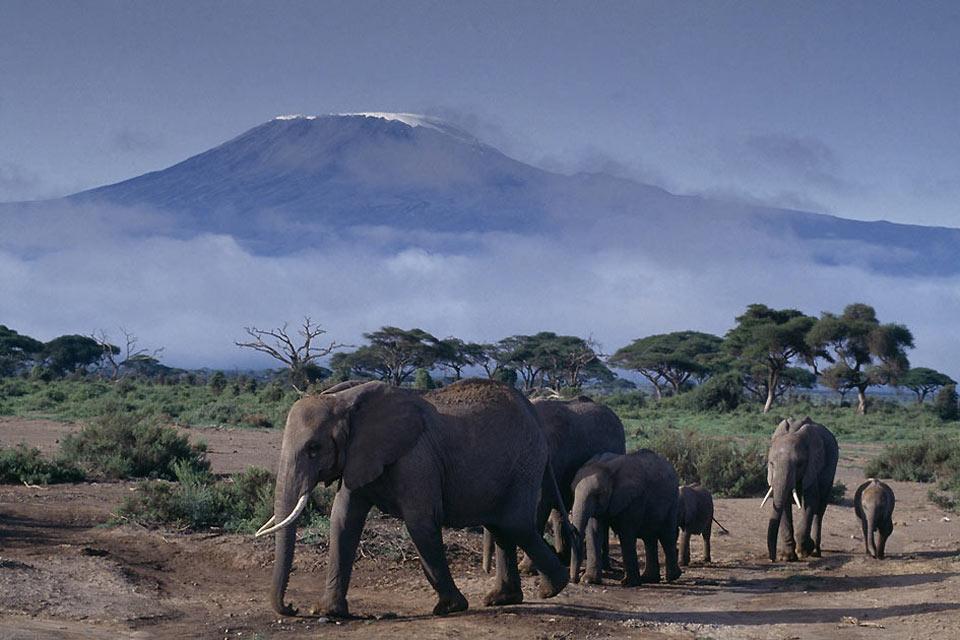 La reserva de Amboseli , El parque nacional de Amboseli , Kenia