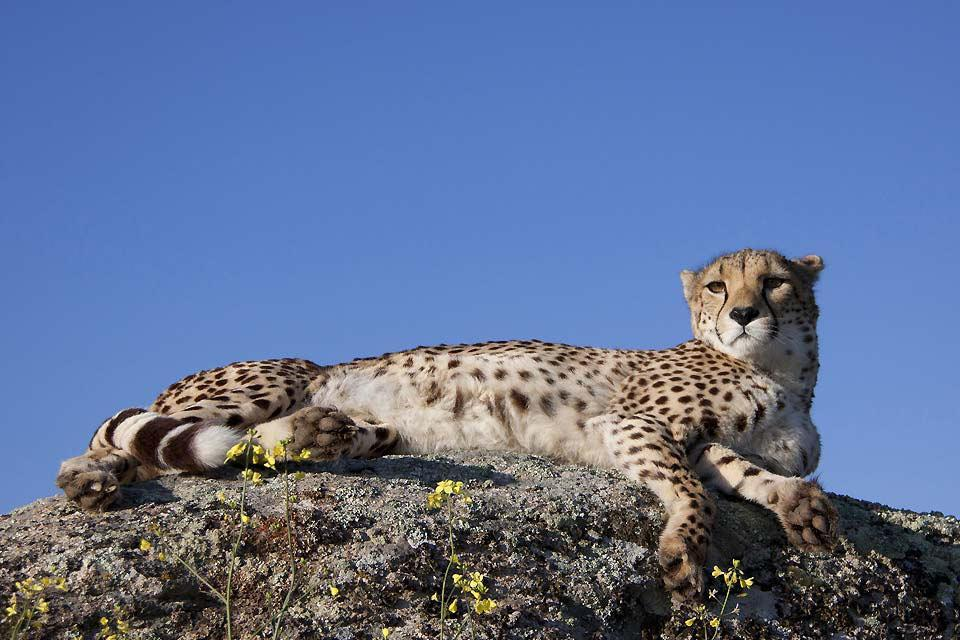 La reserva de Amboseli , La antigüedad del parque , Kenia