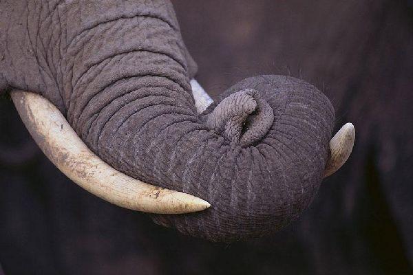 La reserva de Marsabit , Los elefantes de Marsabit , Kenia