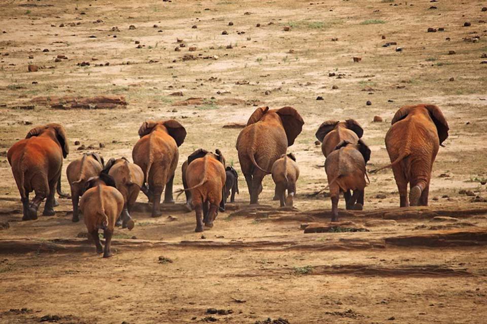 Marsabit National Park , Elephants in Marsabit National Park , Kenya