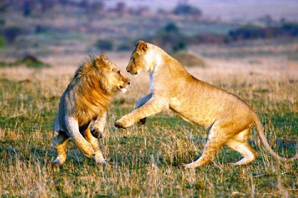 Nairobi National Park , Kenya