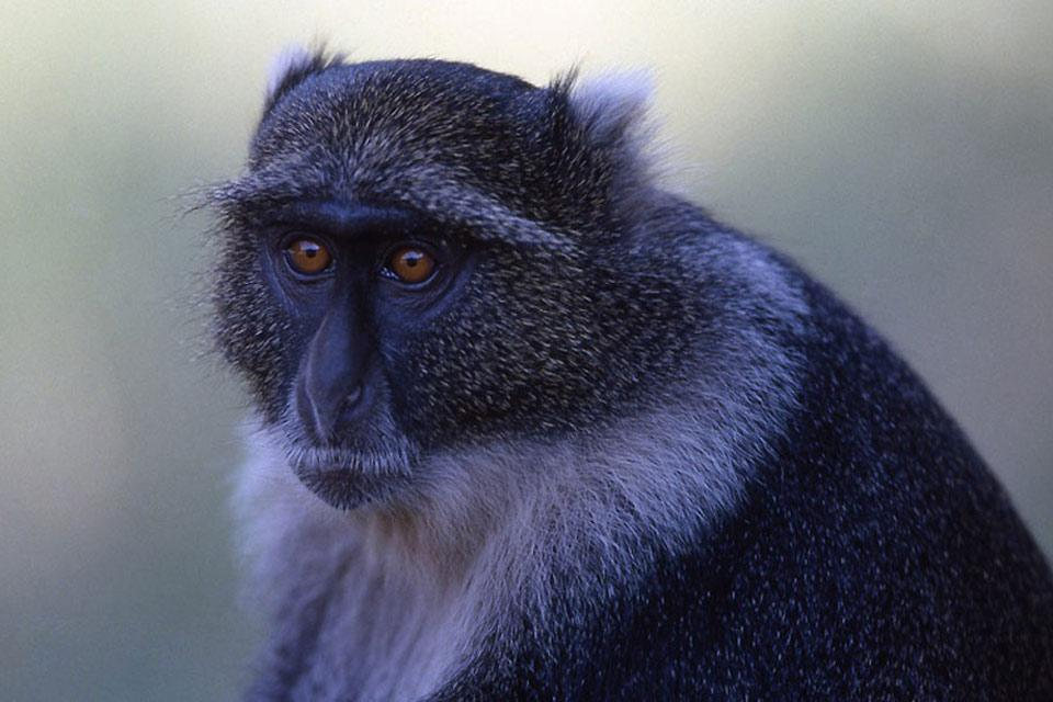 Haller Park , Gli animali del parco , Kenya
