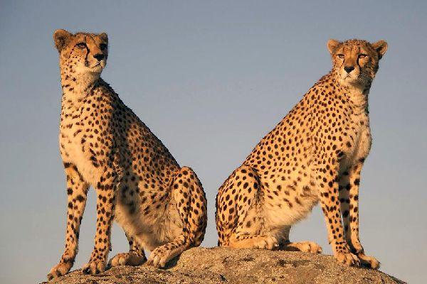 Tsavo National Parks , Kenya