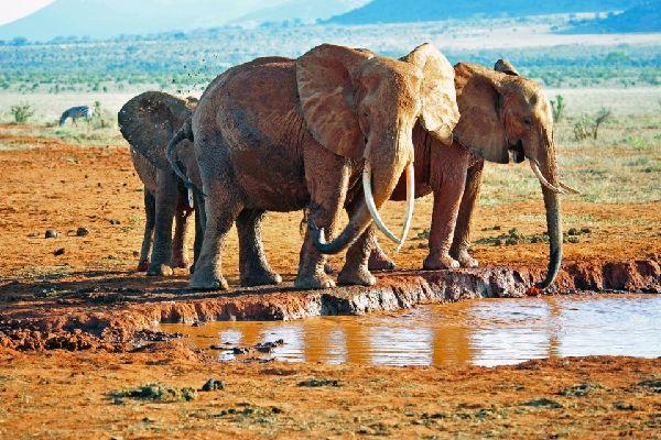 Tsavo National Parks , Birdlife , Kenya