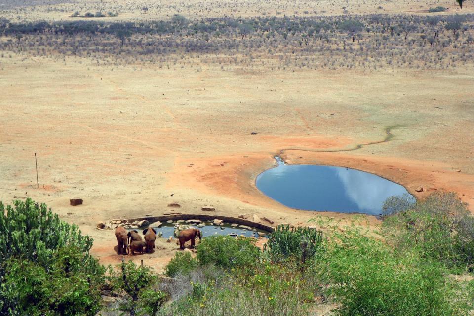 Tsavo National Parks , Zebras , Kenya