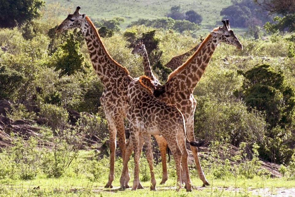 Tsavo National Parks , A friendly creature , Kenya
