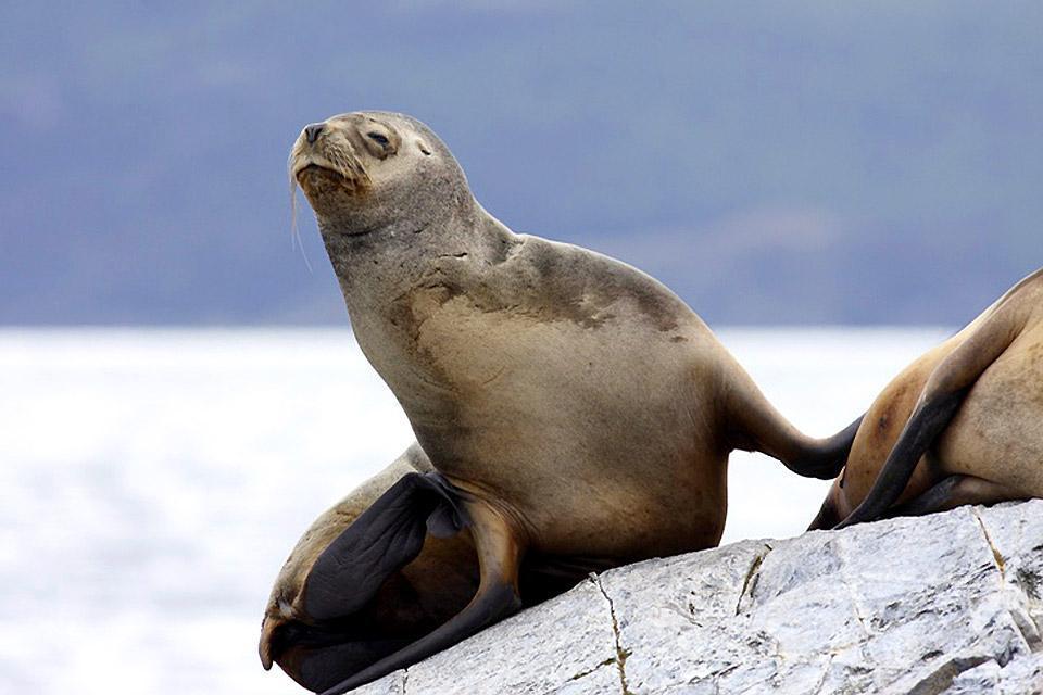 Sea life , Argentina
