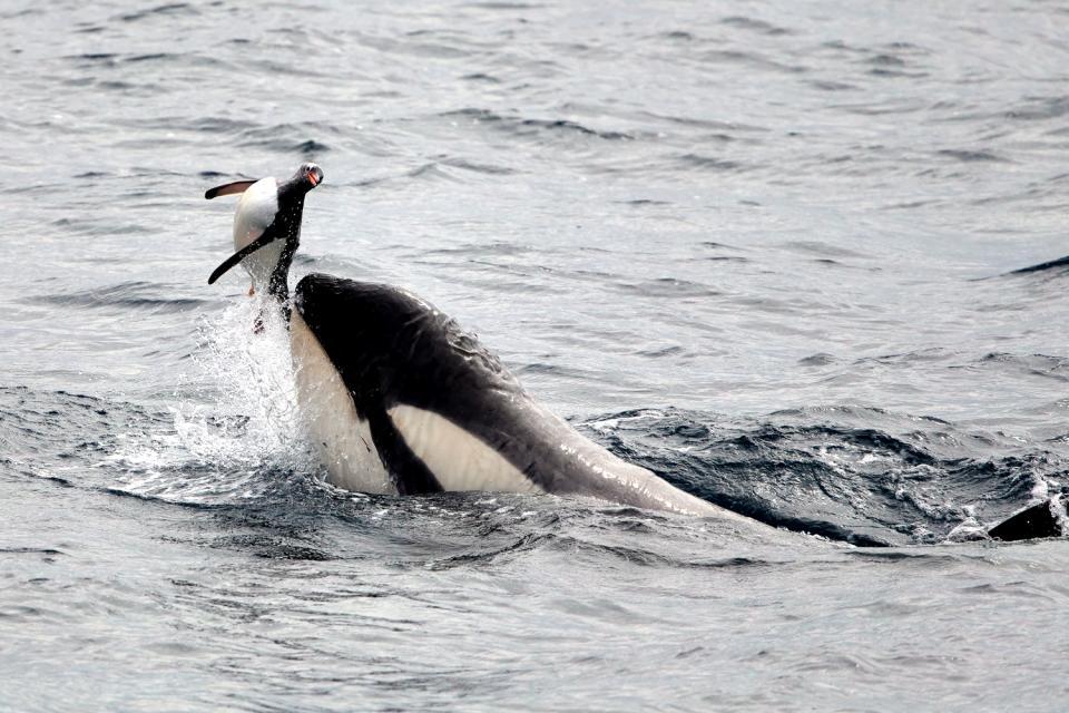 Sea life , Marine wildlife , Argentina