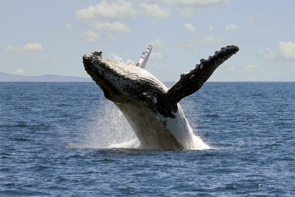 Sea life , A whale , Argentina