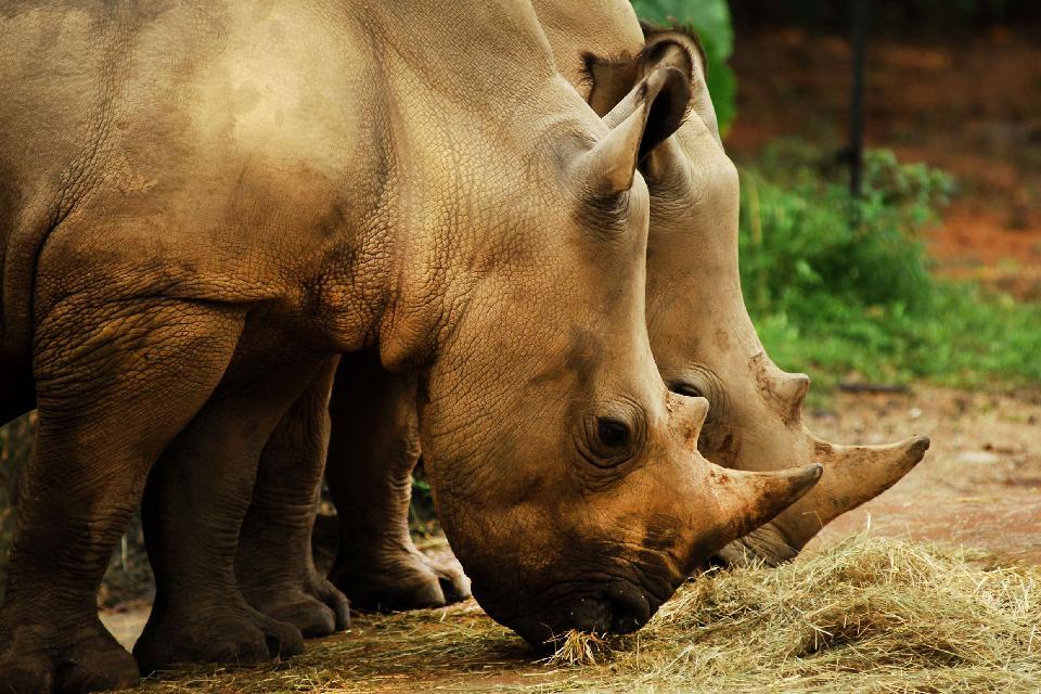 Vom Aussterben bedrohte Arten , Laos