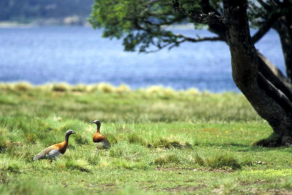 La faune de la Pampa , Argentine