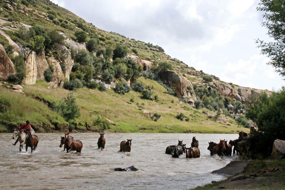 Les arts et la culture, Afrique, Lesotho, basotho, cheval, agriculture, mammifère, faune