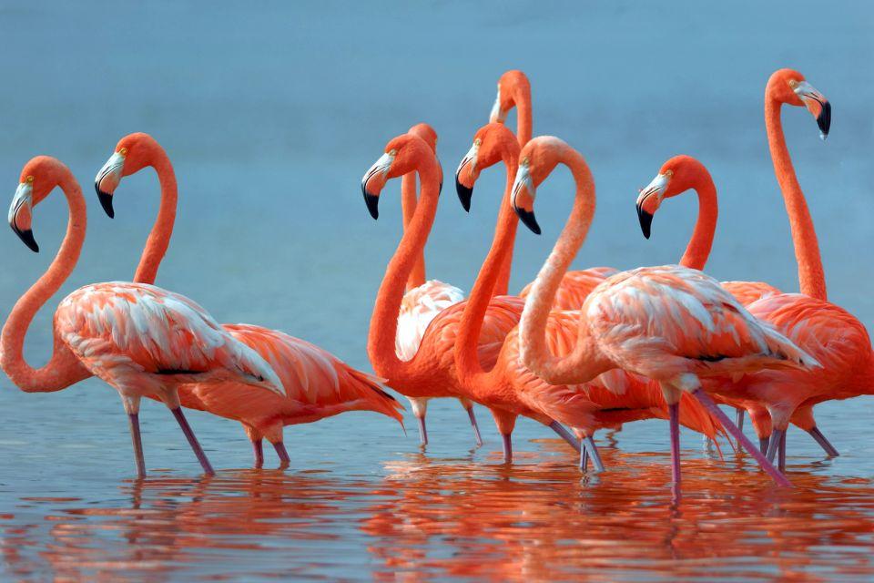 La faune, Afrique, faune, héron, Lesotho, Héron goliath, Ardea, oiseau, échassier