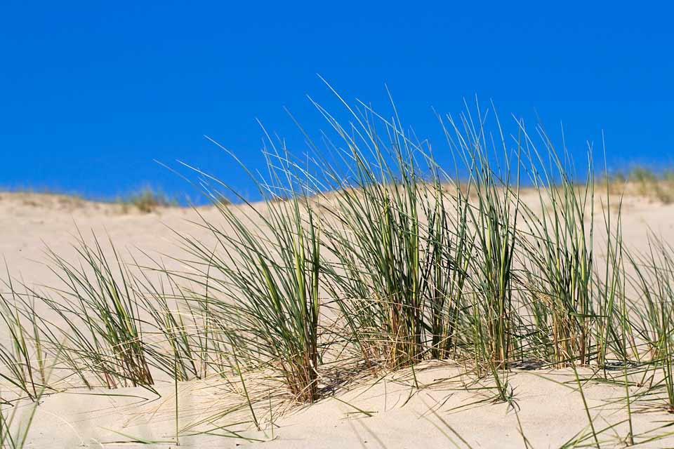 La località balneare di Jurmala , Le dune di Jurmala , Lettonia